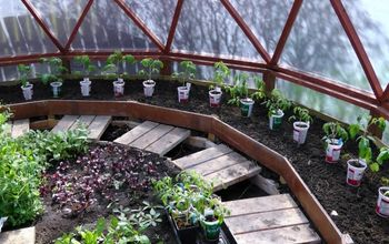 How to Transplant Heirloom Tomato Plants Into the Ground
