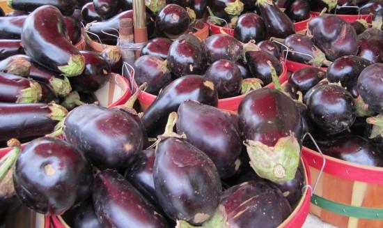 growing eggplants aubergines, gardening
