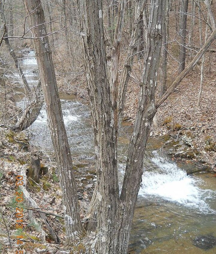 This is a stream that runs though our development... not close enough to my house though for me to enjoy on daily bases