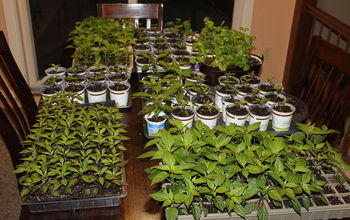 starting our seeds indoors getting ready for spring, gardening, Usually by late spring we have plants everywhere ready to go into the garden