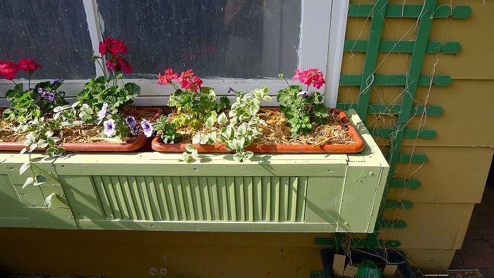 I love geraniums.