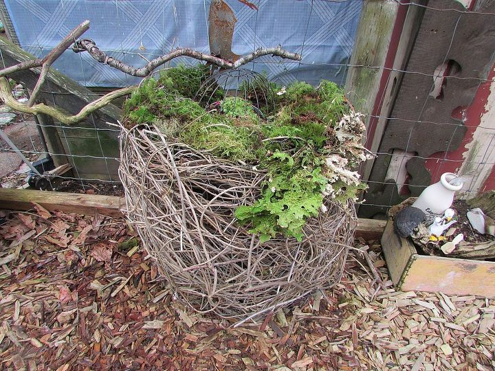 wisteria succulent planter basket, flowers, gardening, succulents