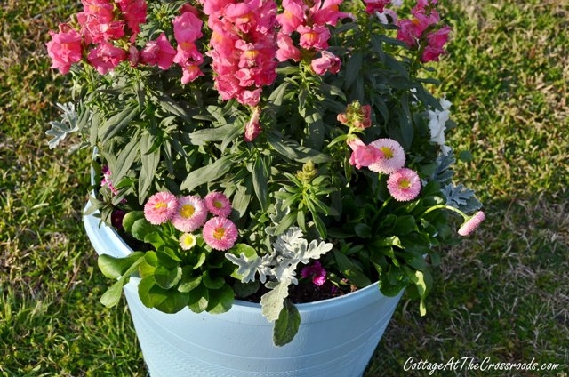 Spring in a pot!