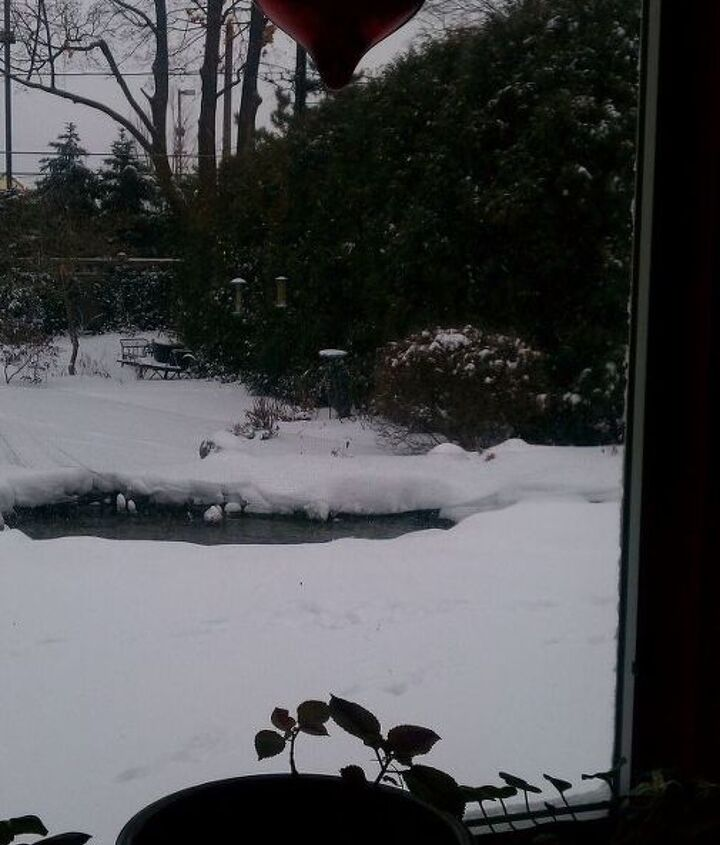 Here's a recent photo of what this pond looks like from inside during the winter.