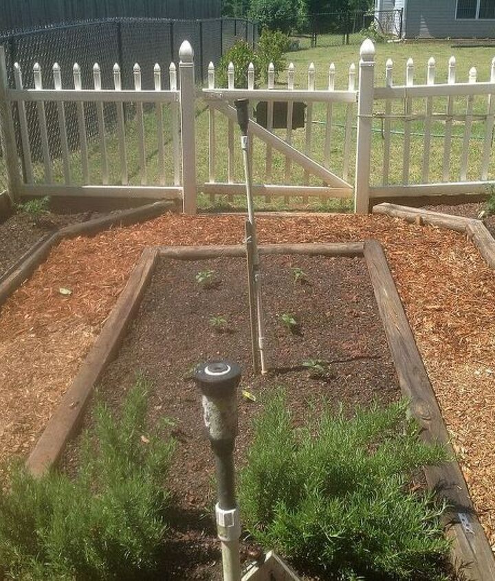 my vegetable garden 2013 edition, gardening
