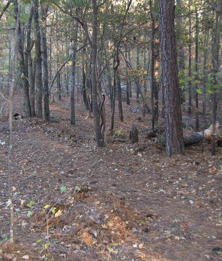 Cleaned underbrush can make a difference