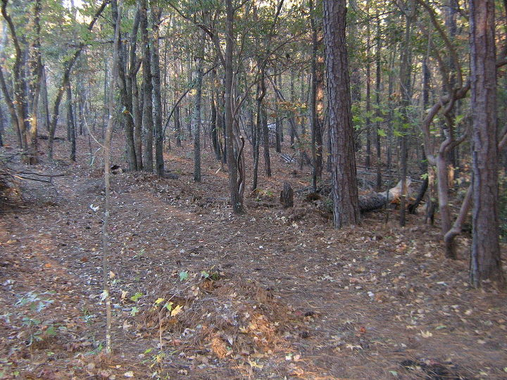 wooded slope needs attention, landscape, Cleaned underbrush can make a difference