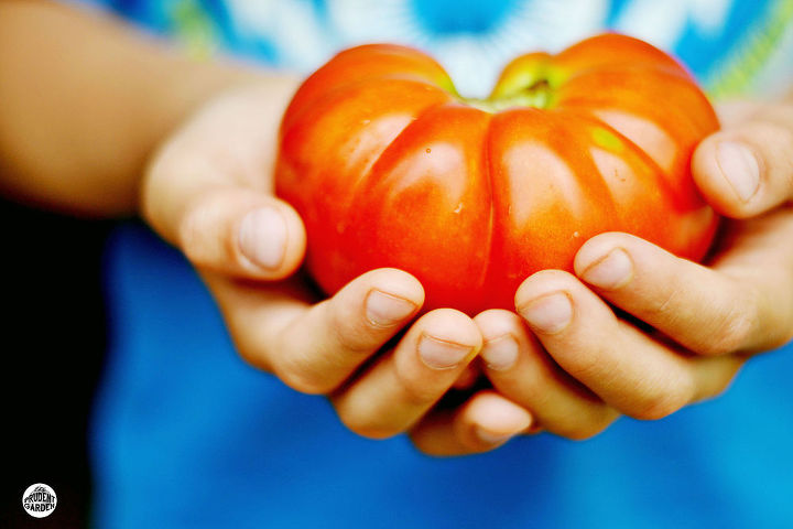 tips on growing great tomatoes, container gardening, gardening