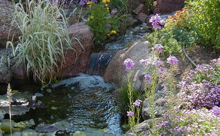 water gardening ponds water features waterfalls koi ponds outdoor lifestyles, outdoor living, ponds water features, Marginal plants and a lily add extra beauty to this pond