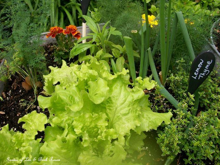 The galvanized garden held a lot of herbs & veggies!