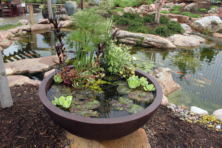 Garden centers carry patio ponds made specifically for container water gardens.