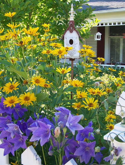 gardener beware plantings that should come with a warning label, container gardening, flowers, gardening, raised garden beds