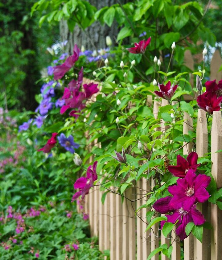 The colorful scene in our Fence Garden today.