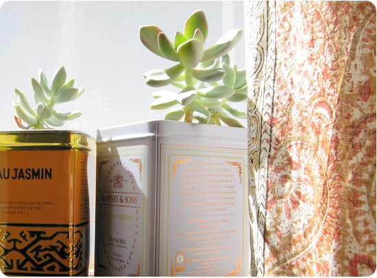 Tea tins. Turn empty tea tins or coffee cans into your next planter! Just be sure to create drainage holes in the tins by hammering a thin (but sharp) nail through the bottom of the tin a few times.