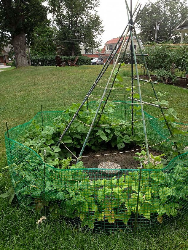Bean TeePee. Looks like we need to start sooner or hope for a longer growing season for this to work.