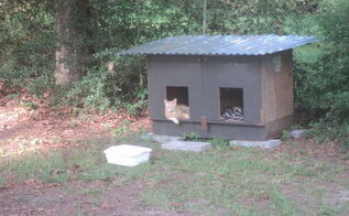 dog house, pets animals