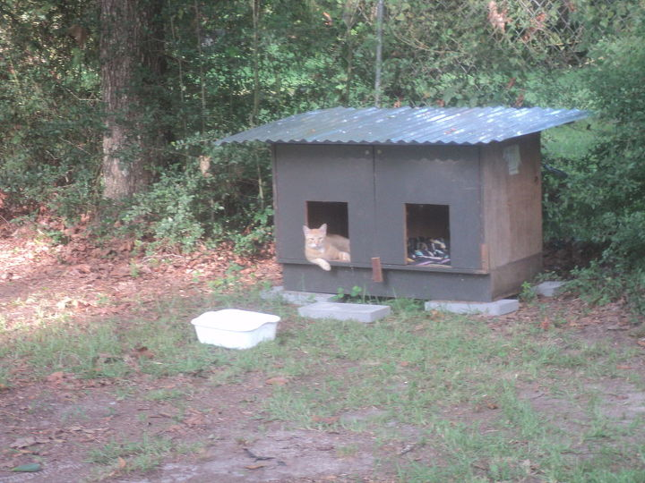 dog house, pets animals