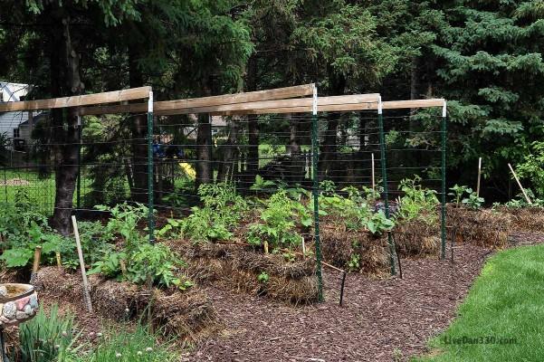 straw bale garden trellis tips, gardening