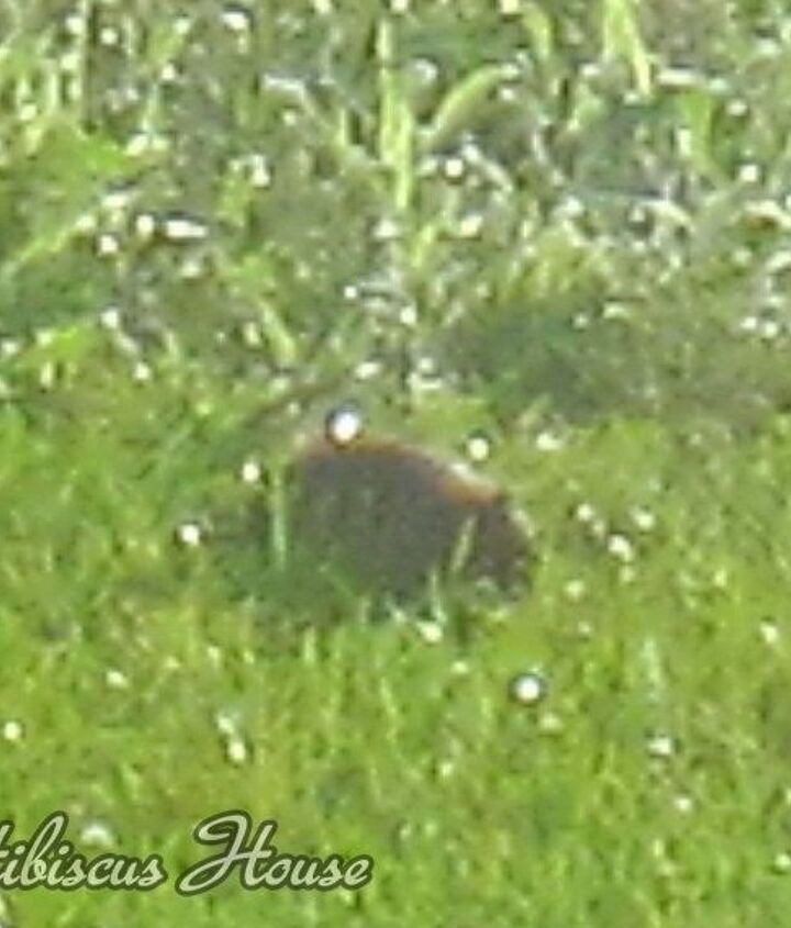 Fuzzy pic of critter...Does anyone know what it is?