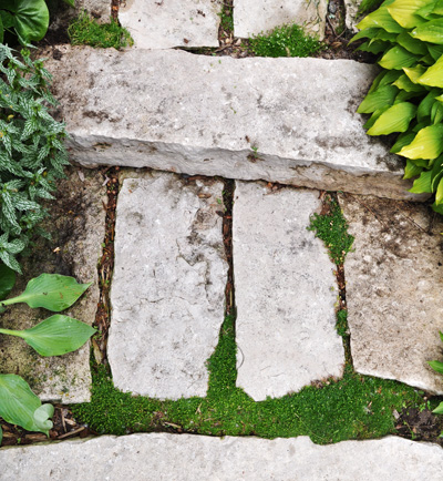 got cracks fill em, gardening, landscape, This is some Irish Moss in the cracks We loved the look so we re planting some more The green makes such a graphic statement and becomes a piece of living art