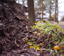 the dirty truth about composting, composting, gardening, go green, Add material regularly so the beneficial bacteria in the pile always has something to eat As the bacteria works the pile will get warmer and warmer In fact if you have a really active pile on cold days you may even see steam
