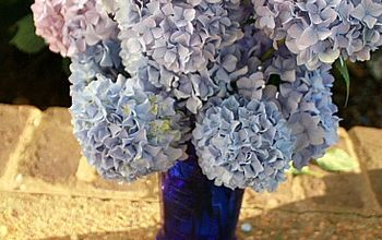 cutting and arranging tips for hydrangea blooms, flowers, gardening, hydrangea, Enjoy your blooms longer by taking your vase of water with you when cutting stems Plunk stems into the water quickly after cutting