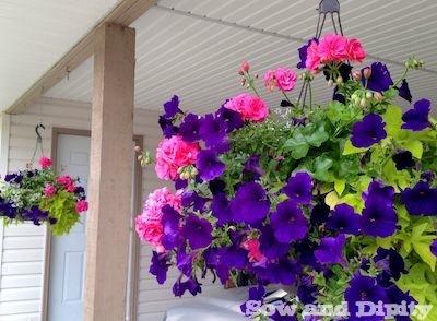 Hanging baskets that last all summer long hometalk hanging baskets that last all summer long flowers gardening perennials mightylinksfo