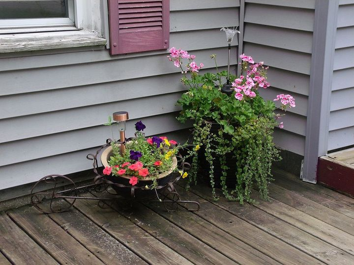 the brown thumb is dead, flowers, gardening