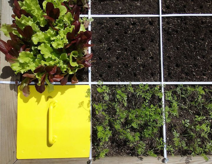 As long as your soil is healthy, it doesn't matter what went wrong the first time around. Each replanted square is a chance to start over.