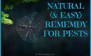 a natural easy remedy for pests, pest control