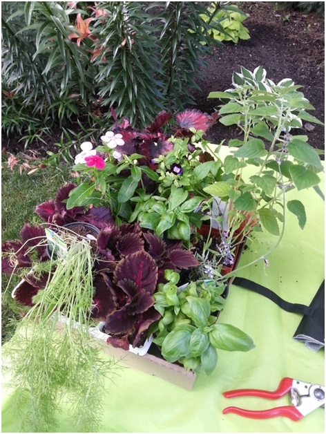 The first thing you need to do is decide on what you will plant.  On the post, you will find examples of a sunny container garden and a part shade garden.  You should be sure that the plants have similar requirements.