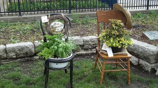 q i can t sit on these chairs so what can i do with them, painted furniture, repurposing upcycling, this was a sitting pretty gardenclub contest i won 1st place with an herb garden the black chair