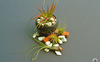 Air Plants: The Nearly Indestructible House Plant
