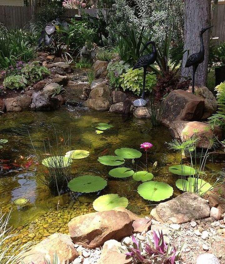 Beautiful backyard ecosystem Koi pond near Houston, TX with two waterfalls