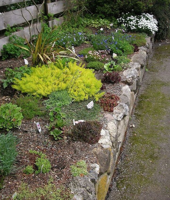 Rock garden at Darts Hill, Surrey BC.I love this look using alpine plants and hoped to have our rock garden wall look similar.