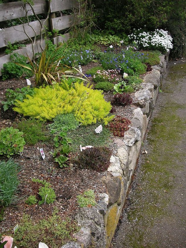 how to build a rock garden, gardening, landscape, succulents, Rock garden at Darts Hill Surrey BC I love this look using alpine plants and hoped to have our rock garden wall look similar