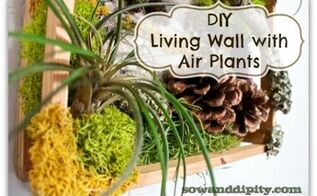 diy living wall with air plants, crafts, gardening, home decor, This easy DIY Living Wall with Air Plants is a mini version that can go anywhere