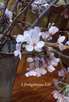 cheery cherry blossoms in vintage buckets, home decor