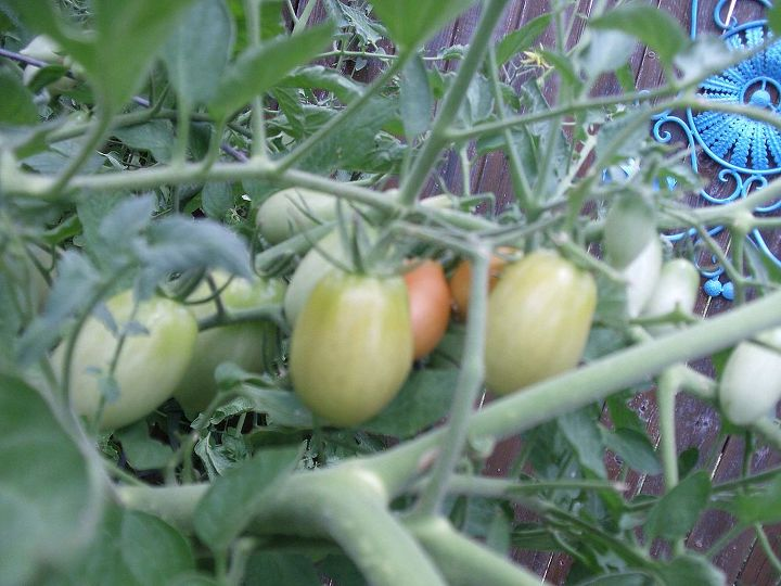 I planted 2 tomato plants and it gave us more than we can handle, my neighbor was happy...LOL