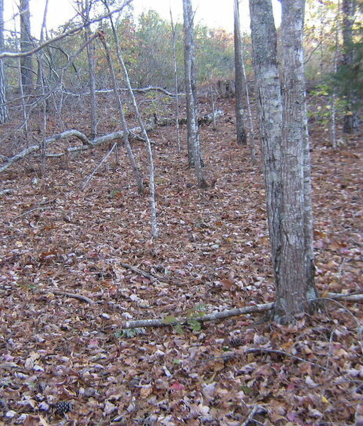 This is the slope  looking towards the property line.  Want to clear this and plant tall shrubs here.