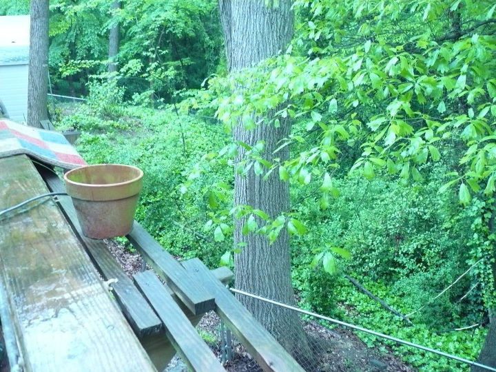 We live in a tree house!  The limb is almost touching our deck about 12' up!