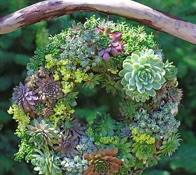 Learn How To Make A Succulent Wreath, Crafts, Flowers, Gardening, Succulents ,
