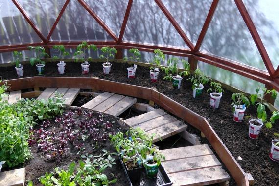 Yogurt Container Make Perfect Tomato Planters   Hometalk on