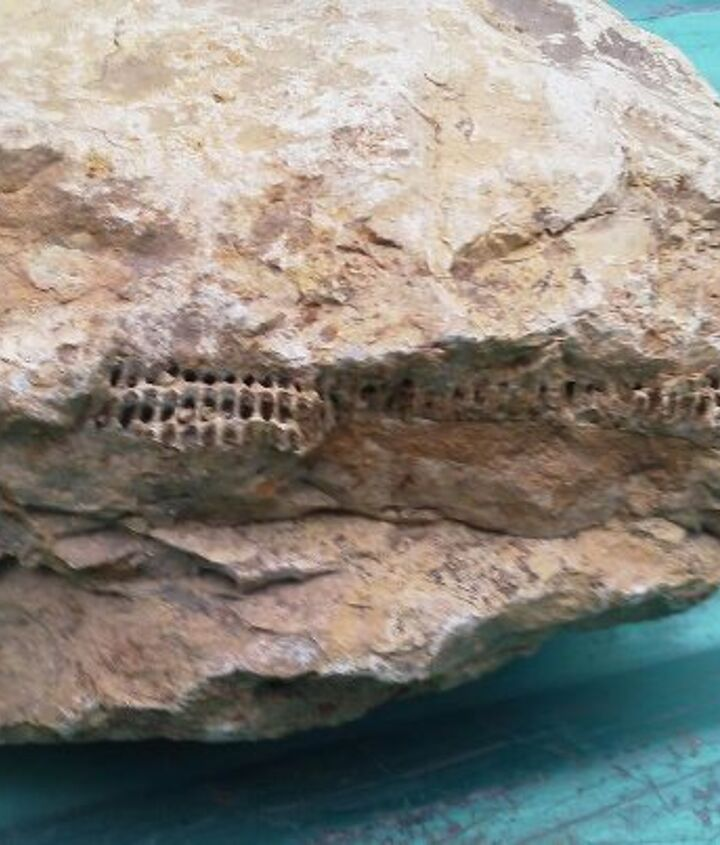 a weird fossil or something inside the limestone can anyone tell me what it is, outdoor living