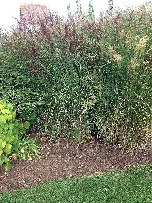 grasses, gardening
