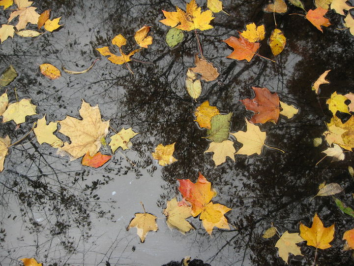 This are leaves floating in the creek with the trees they came from reflected above.