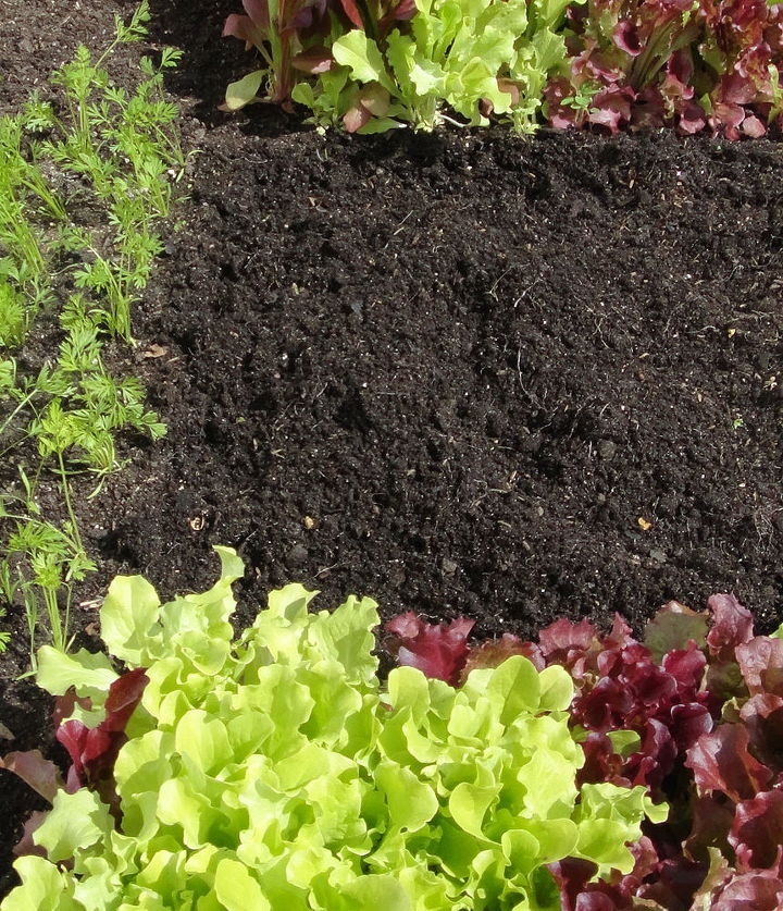 Check the soil. Did you use too much or too little fertilizer the first time around? Any pests or defects?