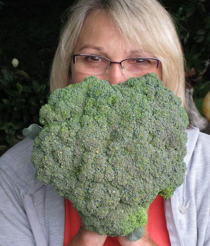 Heart broccoli