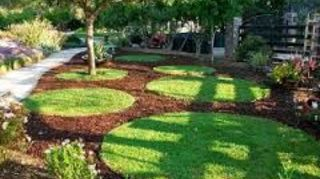 q planting under shady tree with roots, gardening, I have seen this one on other websites but I think what would be a great design is to make some sort of a flower petal or star shaped mulch design surrounding your tree base and then the outside area with artificial turf