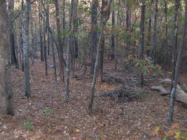 wooded slope needs attention, landscape, These sapplings can go This is near the north property line and is steep enough to need steps ramp etc